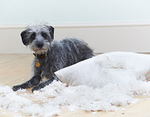 Feather Duvet Cleaning
